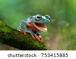 Stock photo tree frog funny frog 753415885