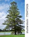 Small photo of Abies Balsam at Albert Park