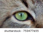 Cat\'s Green Eye Close Up.