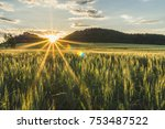 Beautiful Barley Field In...