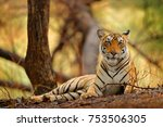 indian tiger female with first... | Shutterstock . vector #753506305