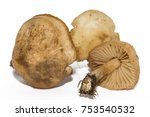 marasmius oreades  the scotch... | Shutterstock . vector #753540532