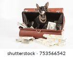 Stock photo the dog climbed into the bag with the money a rich dog 753566542