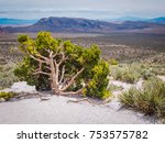 Desert Tree At The Red Rock...