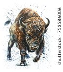 Watercolor  Buffalo  Bison ...