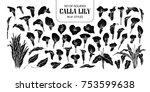 set of isolated silhouette...   Shutterstock .eps vector #753599638