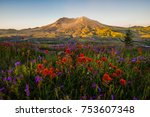Mt St Helens and wildflowers at sunrise