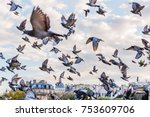 picture of a flying flock of... | Shutterstock . vector #753609706