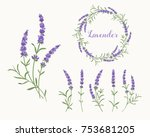 beautiful violet lavender... | Shutterstock .eps vector #753681205