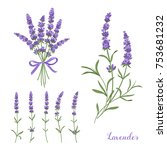 elegant lavender collection ... | Shutterstock .eps vector #753681232