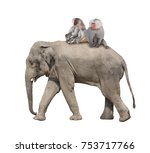 animal friendship. three monkey ... | Shutterstock . vector #753717766