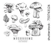 Forest Types Of Mushrooms...