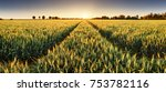 panorama of wheat field at... | Shutterstock . vector #753782116