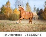 beautiful red horse running...   Shutterstock . vector #753820246