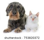 Stock photo old dachshund and kitten in front of white background 753820372
