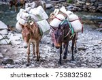 two old donkeys carrying goods... | Shutterstock . vector #753832582
