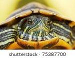closeup of a red ear slider | Shutterstock . vector #75387700