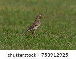 Beautiful Migratory Bird ...
