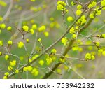 spring blooming tree on a... | Shutterstock . vector #753942232