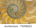 detailed photo of a halved... | Shutterstock . vector #75398623