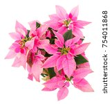 pink and green christmas star... | Shutterstock . vector #754011868