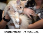 beautiful cat s  at the cat... | Shutterstock . vector #754053226