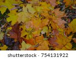 yellow leaves in the fall | Shutterstock . vector #754131922