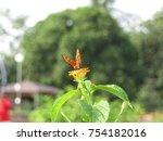 Stock photo butterfly isolated butterfly 754182016