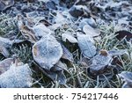 frosted leaves. hoarfrost. | Shutterstock . vector #754217446