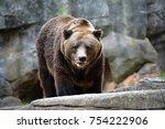 huge grizzly bear    Shutterstock . vector #754222906