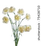 Bunch Of White Carnation...