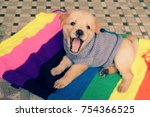 Cute Puppy On Colorful Blanket...