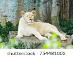 A White Lioness  Female Lion...