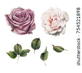 roses and leaves  watercolor ... | Shutterstock . vector #754521898