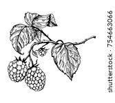 raspberry branch engraving... | Shutterstock .eps vector #754663066