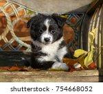 cute young black bi color... | Shutterstock . vector #754668052