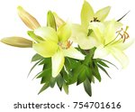 illustration with yellow lily... | Shutterstock .eps vector #754701616