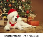 Stock photo christmas dog white puppy retriever in santa hat lying under xmas tee new year pet in present 754703818