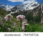 Small photo of Pink Flowers Vespers (Hesperis sp) on the Mountains background