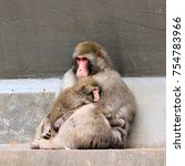 baboon with baby  | Shutterstock . vector #754783966