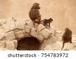baboon with baby  | Shutterstock . vector #754783972