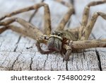Small photo of Brown spider in the family Sparassidae on old wooden surface . Toxicity causes slight swelling. Get rid of the cockroaches. Close up and blur. (Heteropoda venatoria).