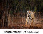indian tiger with first rain ... | Shutterstock . vector #754833862