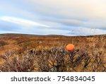 mandarin in tundra    Shutterstock . vector #754834045