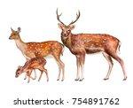 spotted deer  family. female ... | Shutterstock . vector #754891762