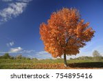 Maple Tree In Autumn  Bavaria...