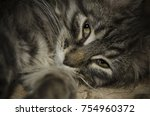 striped cat lying on his side... | Shutterstock . vector #754960372