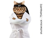 Stock photo angry cat is wearing a kimono cat fighter is engaged in karate do hieroglyph translates karate 754966492