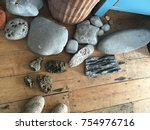 fossils found and bought at the ... | Shutterstock . vector #754976716
