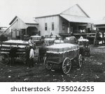 Community cotton gin owned and operated by African Americans in Madison County, Alabama. 1923. Mule wagons of cotton wait in line for ginning.